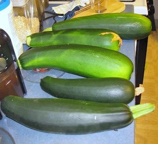 Photo of Super-huge zucchini from our garden