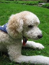 Patriotic Pup