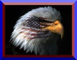 The bald eagle: America's national symbol