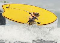 SURF DOG - Agora eu já vi de Tudo