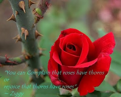"""You can Complain that roses have thorns or rejoice that thorns have roses"""
