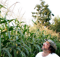 Jonathan Eller looking at his incredibly tall corn