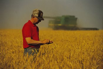 A farmer checking grain in the field with a John Deere combine in the background
