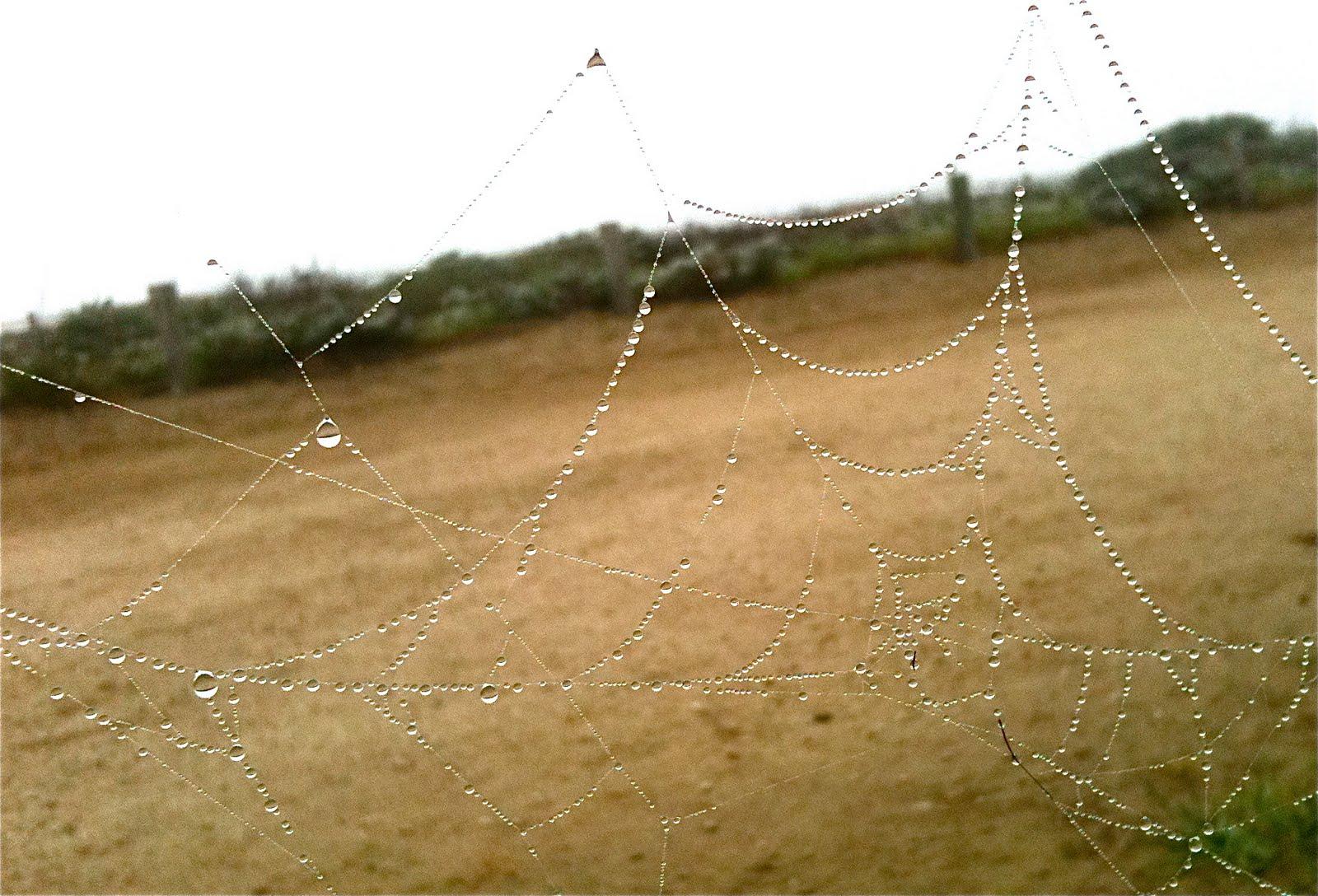 [spider_web.JPG]