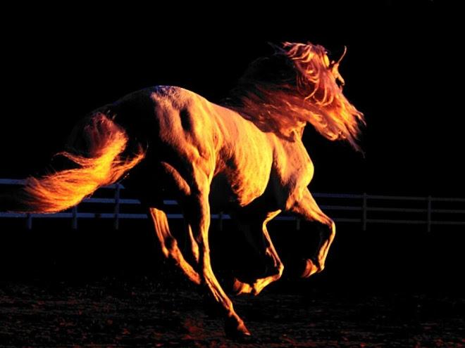 magnifica criatura digna de admiracion