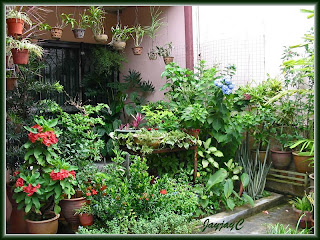 A view of our tropical home-garden design in Kuala Lumpur, on Sept 13 2009