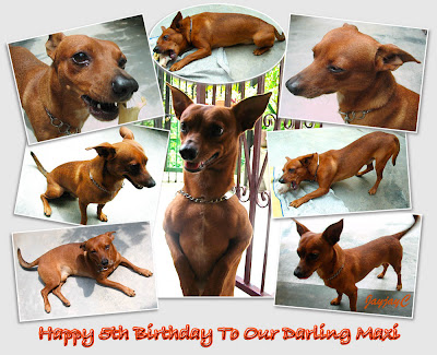 Photo collage of our dog, a miniature pinscher, Maxi - shot on Oct 1 2009