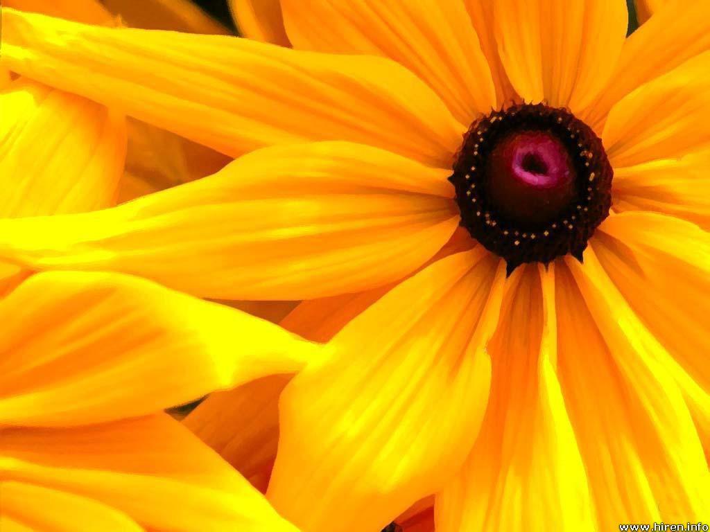 ksu picss Myriad Emotions Inspirare xanthinus Inspirational yellow
