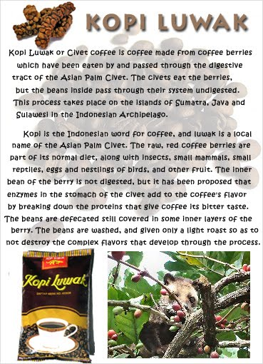 an essay on luwak coffee Photo essay planning why it's better not to drink civet poop coffee in kopi luwak coffee was the one to capture most of our attention because of the.