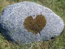 líquens d'amor