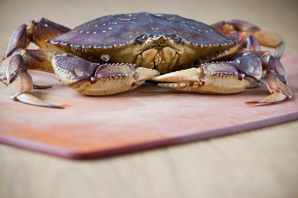 Salt Encrusted Dungeness Crab