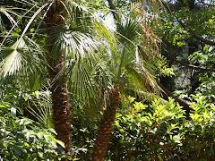 Non è la giungla ma il mio giardino
