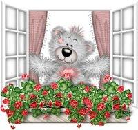 [urso janela.1]