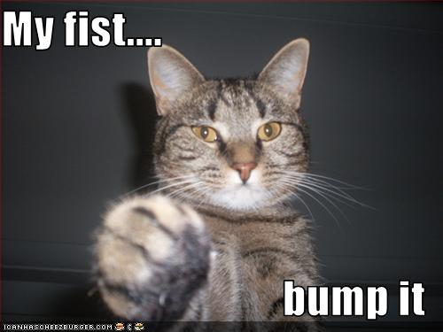 funny-pictures-cat-offers-fist.jpg