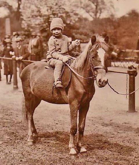 Barns and Horses