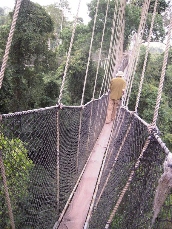 Kakoum Canopy Walk