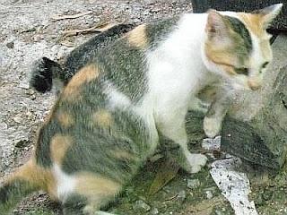 gambar kucing tengah marahkan anaknya