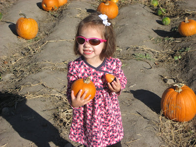 i took mili to wheeler farm to go through the hay maze pick pumpkins and ride on the tractor she loved it - Wheeler Farm Halloween
