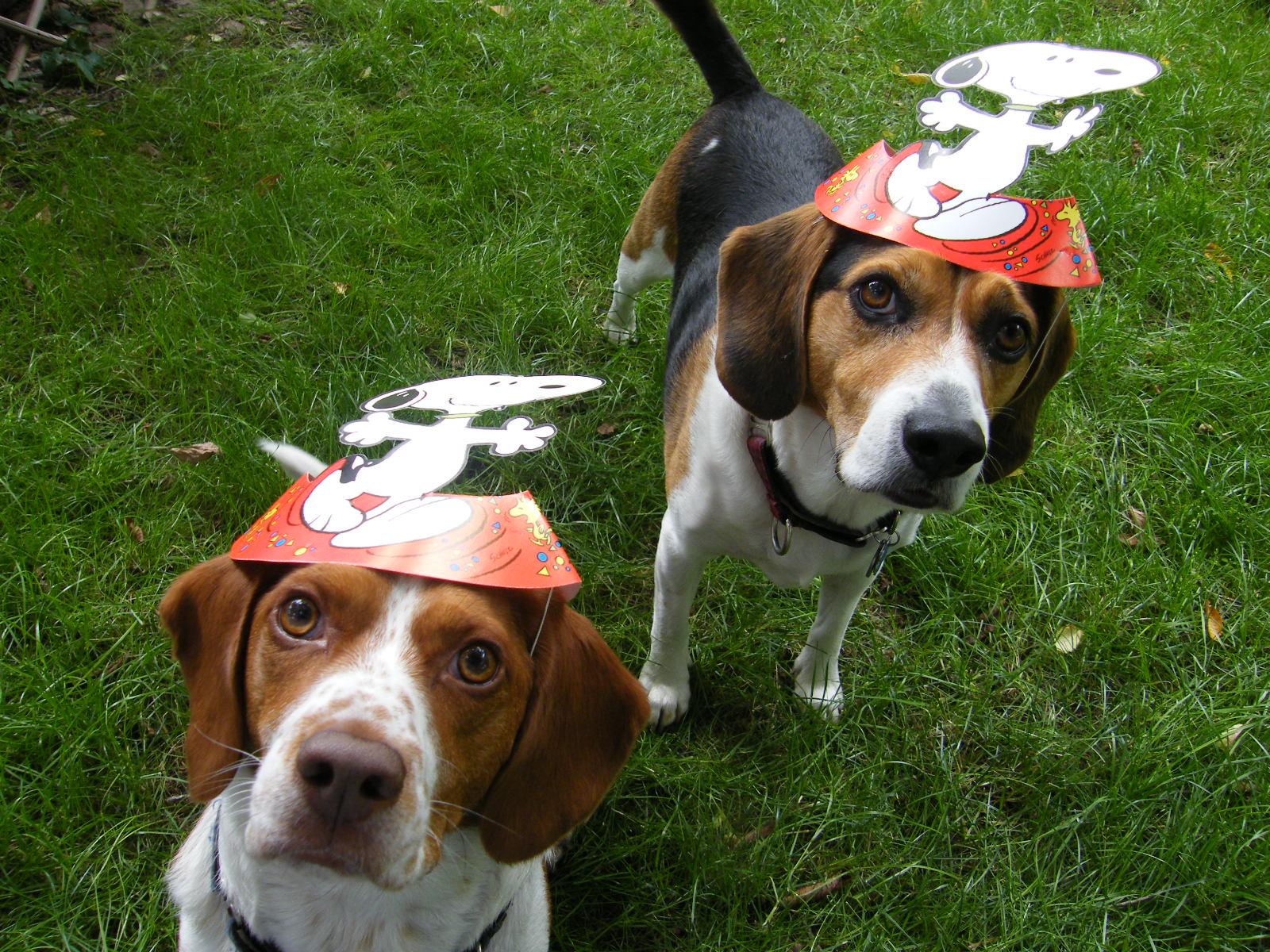 Resultado de imagen para beagle party