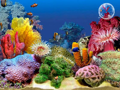 spongebob aquarium background | tropical fish aquarium
