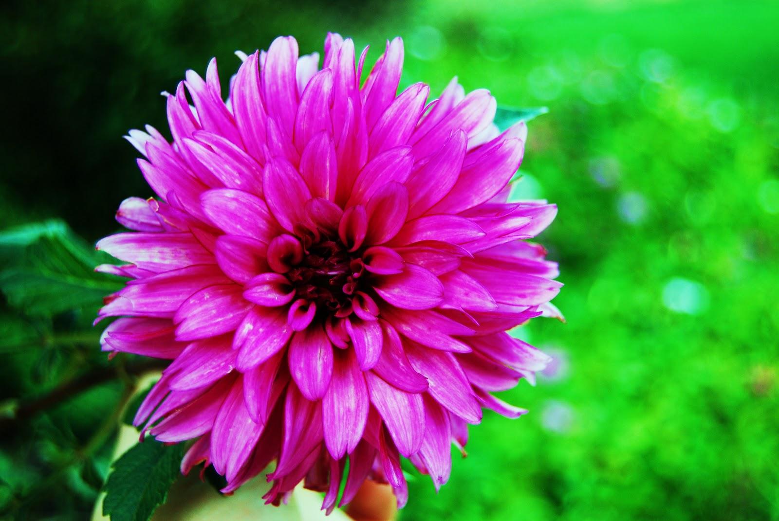 November Flowers 2010