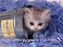 """""""Para mi queridisima gata coqueta con todo el cariño de siempre, Shanty"""""""