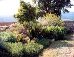 Jardines bonitos de martina for Jardines de bajo mantenimiento