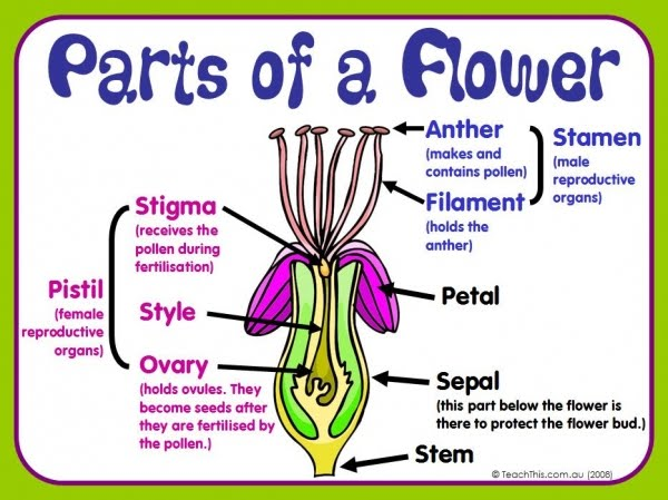 Parts Of A Flower And Their Functions With Diagram Manual Guide