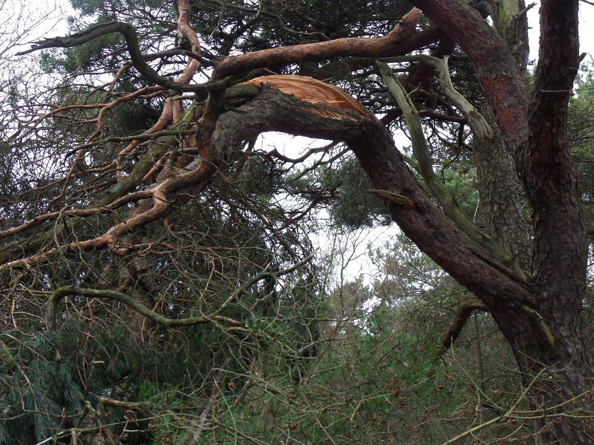 Miljoenen euro s schade door extreme hagel en storm pluimveeweb