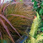 Miscanthus et graminées du jardin
