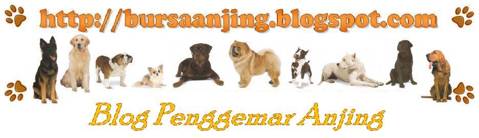 Bursa Anjing