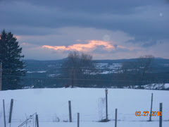 February Sunlight