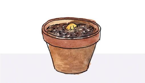 grow avocado by Yukié Matsushita
