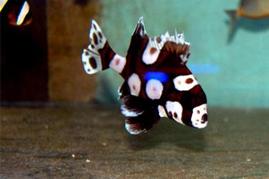CEMILAN OTAK: Hilangkan Penat dengan Ikan Hias Air Laut