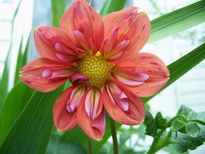 Daylily  Silk Flowers