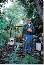 John harvesting Grapefruit