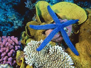 wallpaper starfish