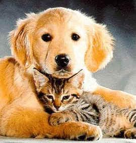 Los animales domésticos son aquellos que viven con el ser humano y ...