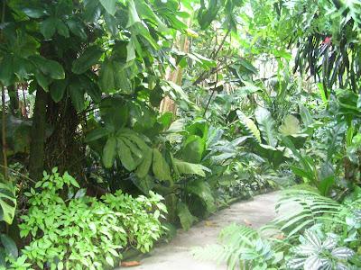 Πανδαισία τροπικών φυτών και