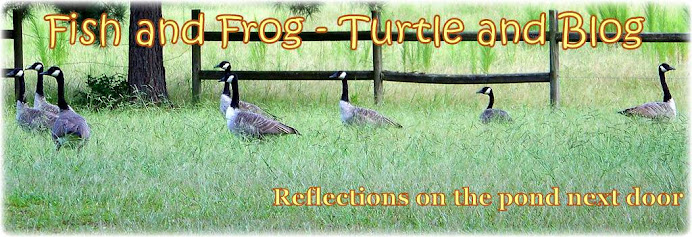 Fish and Frog - Turtle and Blog