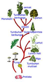 Artikel makalah klasifikasi hewan dan tumbuhan artikel makalah ccuart Choice Image