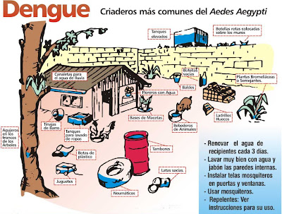 diagrama para prevenir el dengue