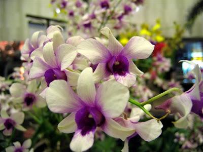 Surah al Baqarah - Orkid