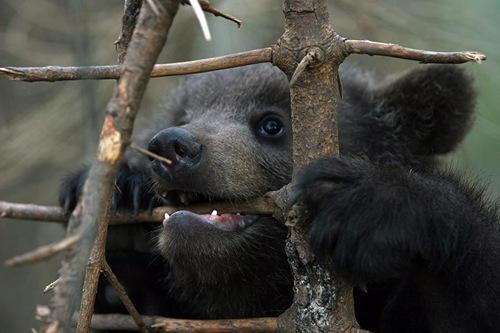 [Bears2]
