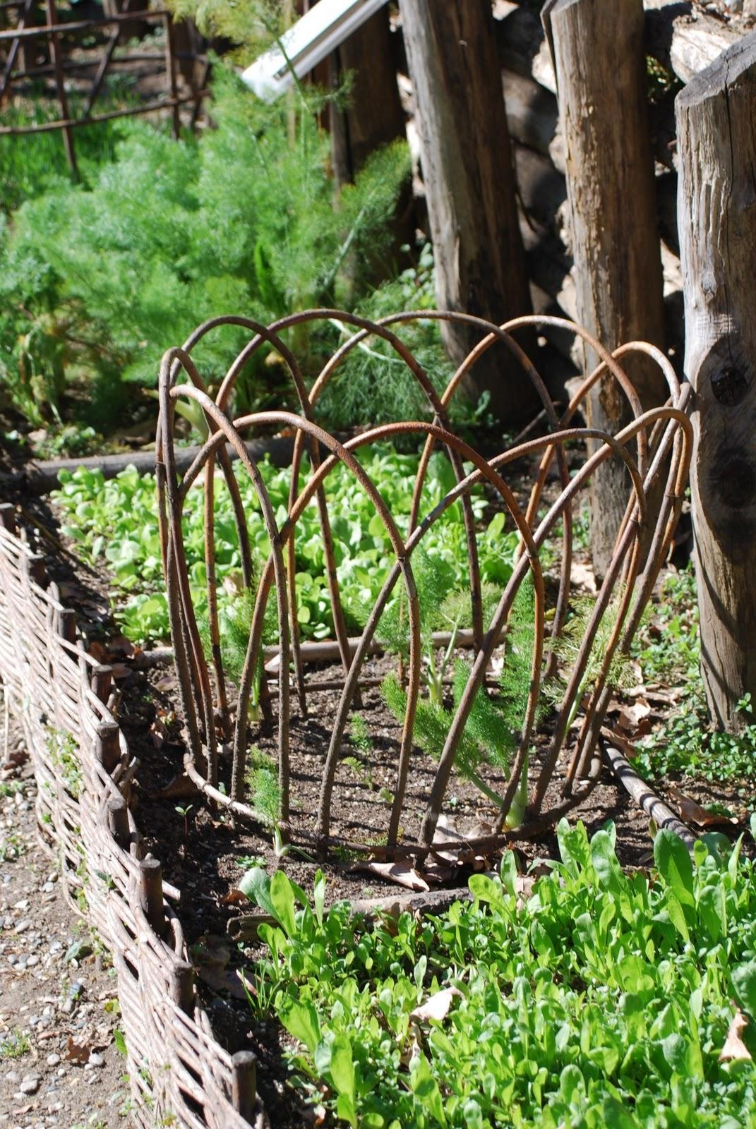 Un anno al giardino medievale di torino l 39 orto e gli for Rami di salice