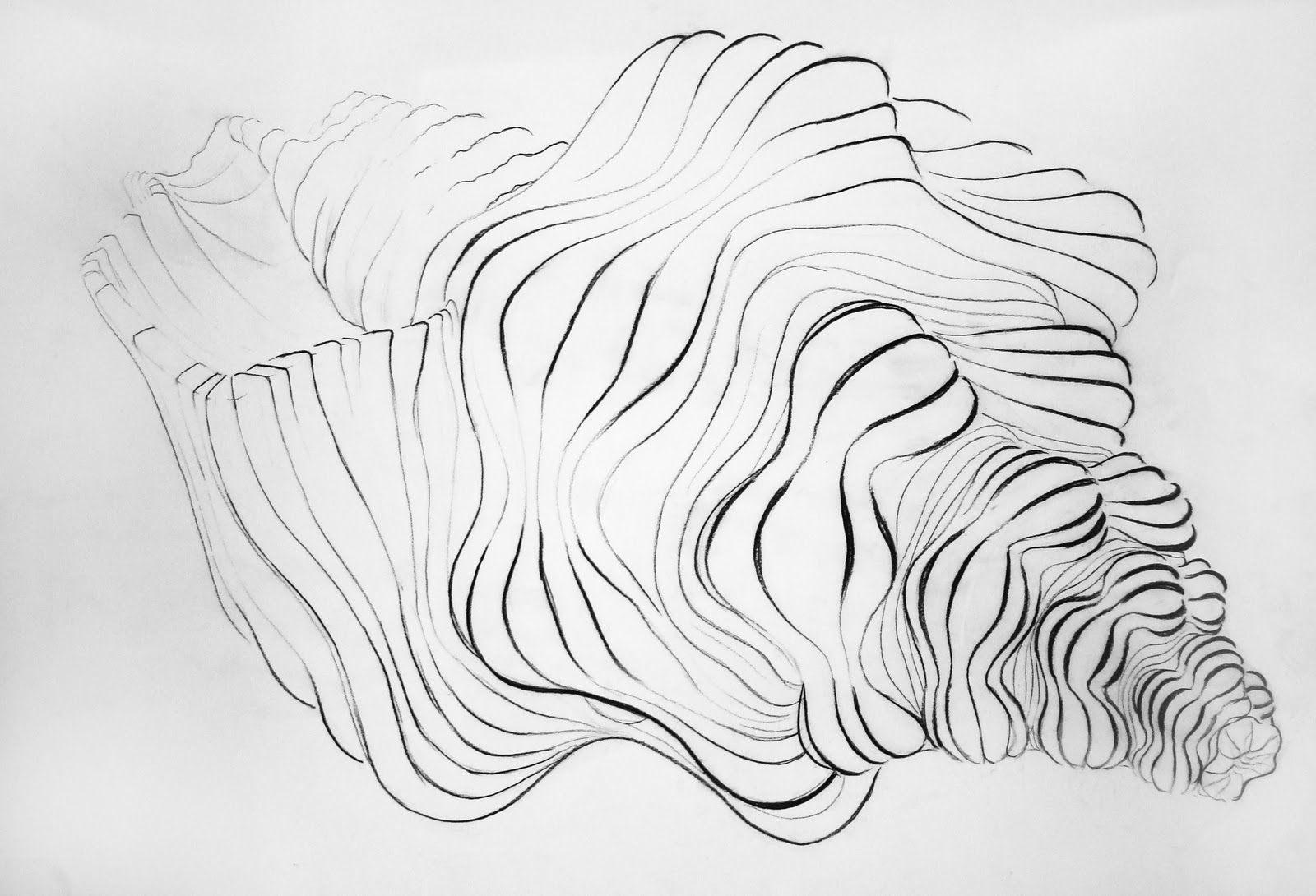 Contour Line Drawing Shell : Life drawing i