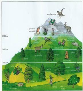Stelvio e flora la vegetazione e l 39 altitudine for Piani di casa di fascia alta