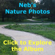 Nature Photos Album