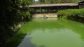 Ulu Yam Farm