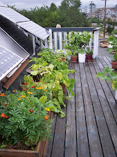 Demo garden 1 - SPEC rooftop